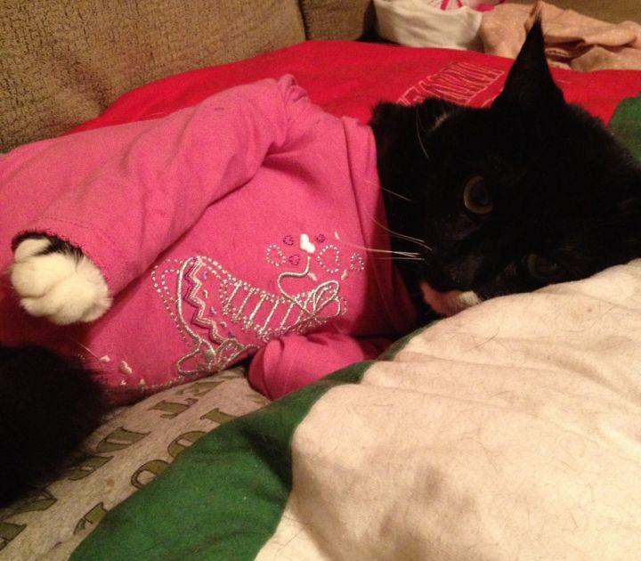 Tripawd, cat, feline, kitty, amputation, surgery, recovery, tips