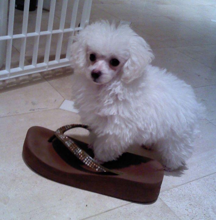 Aunt Belle. No Bigger than a size 8 shoe!
