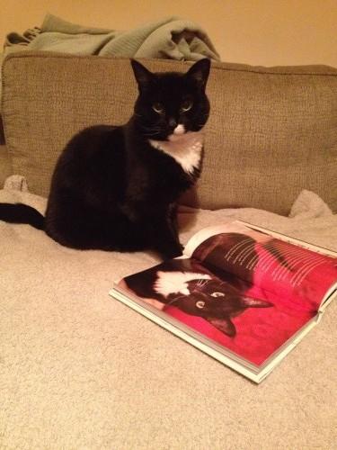 OH MY CAT I'M IN A BOOK!?