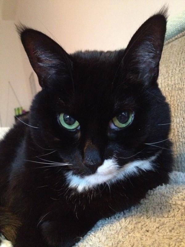 Tripawd Cancer Fighting Kitty Jill