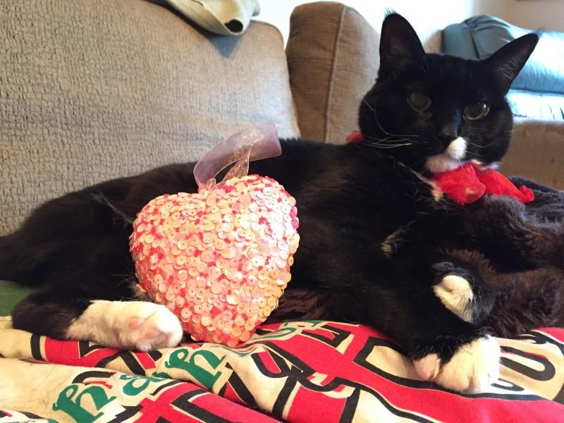 Osteosarcoma cat Tripawd Jill